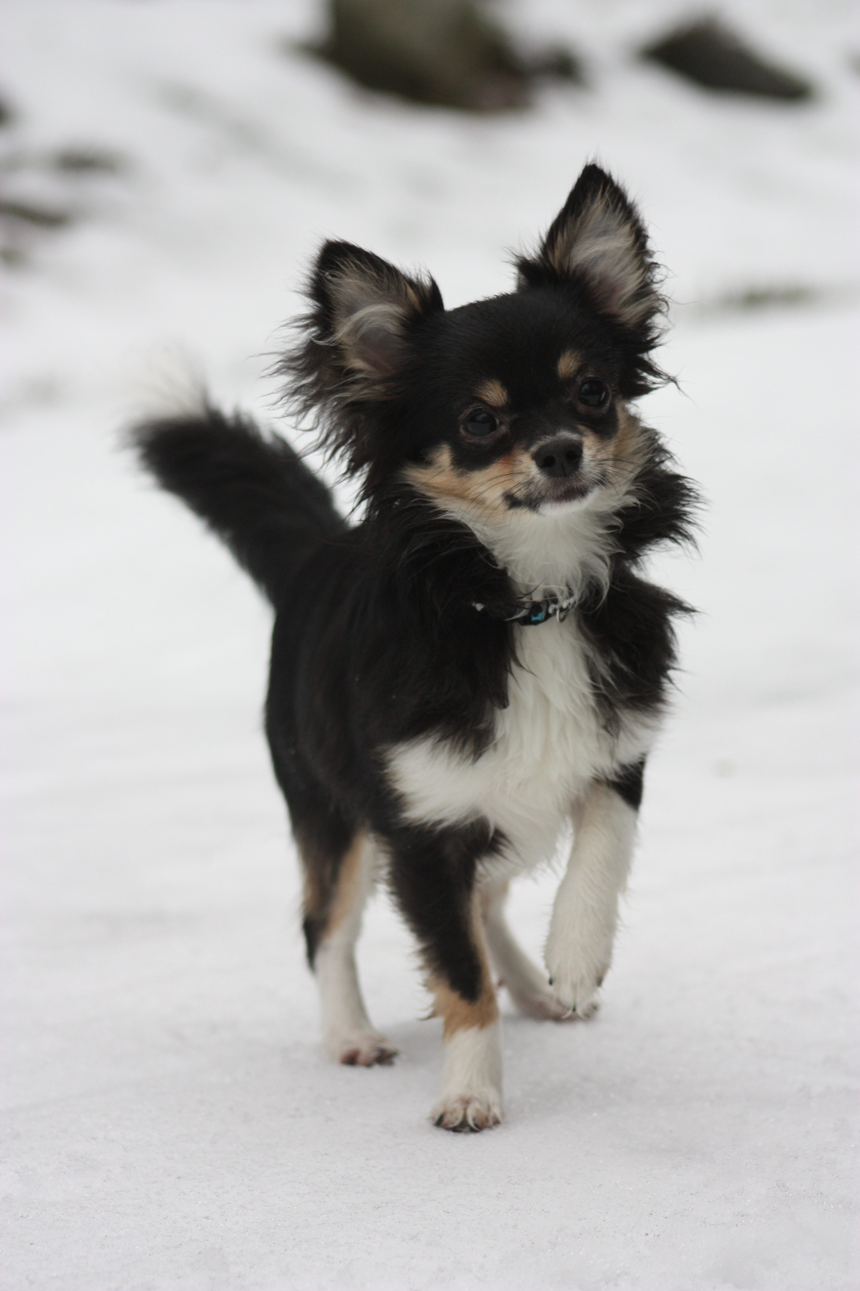 Atlas, Chihuahua