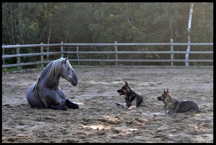 Platsliggning med häst & hund