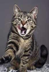 Puma Huskatt